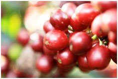 Colombian Coffee Origin and History